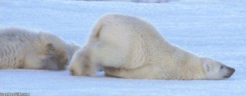 Cet ours polaire qui déteste les lundis.   42 images adorables pour vous faire oublier que le monde court à sa perte