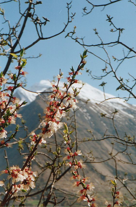 Spring in Hunza Valley
