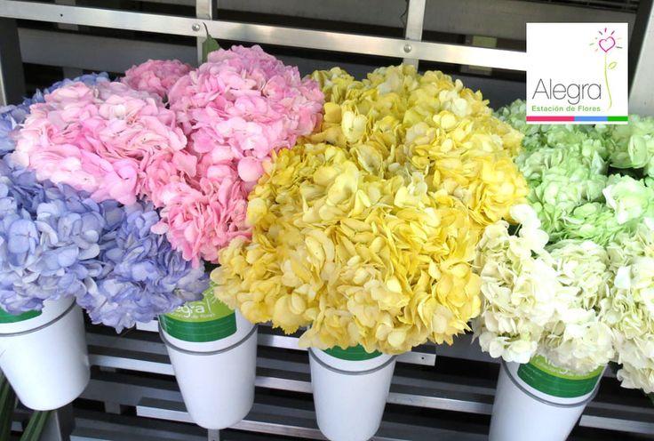 Busca tonos claros en las flores para expresar delicadeza, pureza y alegría. ¿Te gustan estas hortensias?