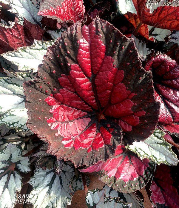Foliage Plants For Lead And Supporting Roles In The Garden