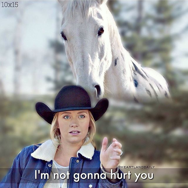 #qotd how old are you?  •  #heartland #cbc #hl #amyfleming #ambermarshall #ghost #horse