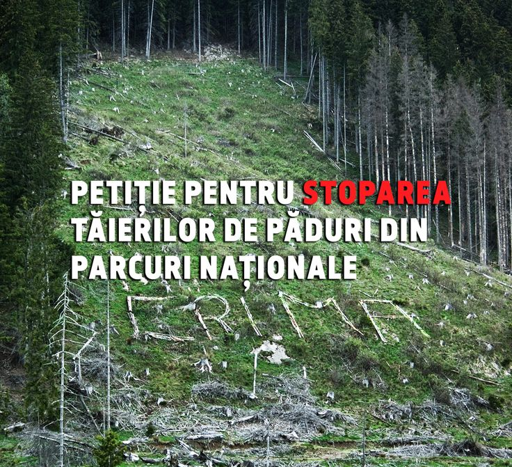 Petition: Stop Cutting Down Forests in National Parks in Romania.  ____  Investigate - Expose - Positive change _____ . Petitie pentu stoparea taierilor de paduri din parcuri nationale.