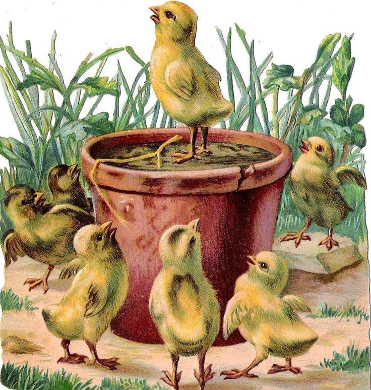 Oblaten Glanzbild scrap die cut chromo Küken chicken  12,8 cm  king chicks