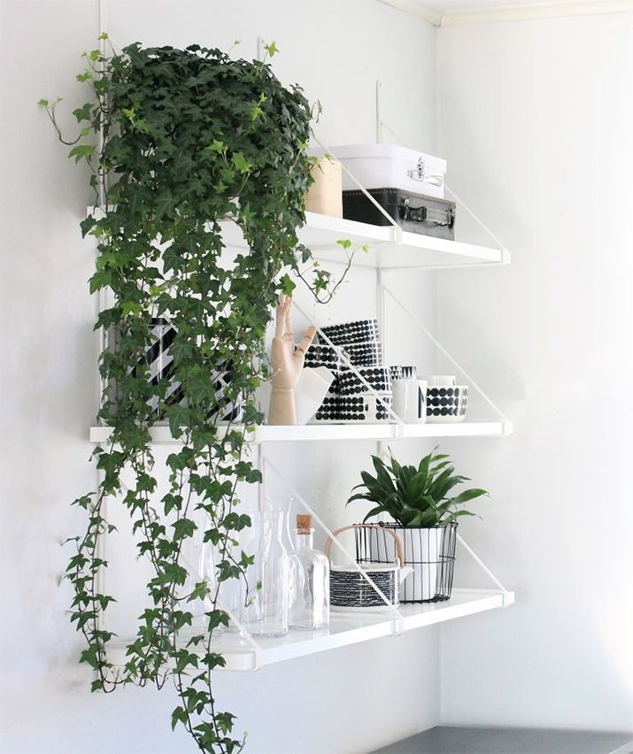 More than anything else, plants add an unexpected and beautiful dimensions to interiors. Read on to discover 9 awesome ways to decorate with plants.