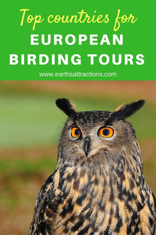 Exploring Europe S Best Birding Tours Earth S Attractions Travel Guides By Locals Travel Itineraries Travel Tips And More Europe Travel Guide European Travel Europe Travel