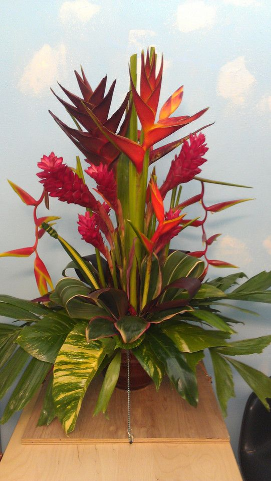 25+ best ideas about Tropical Flower Arrangements on ...