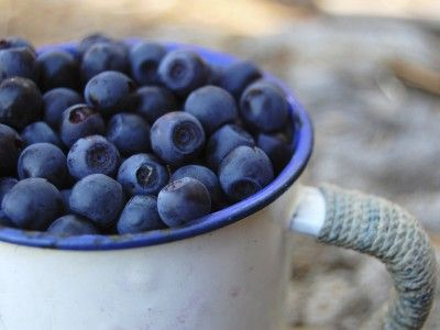 Noble Blue Blueberry is often raised to the noble group of 'superfoods' and with good reason. Blueberry holds fatty acids such as omega 3 and 6, antioxidants, vitamins A, B and C, as well as flavonoids. Blueberries can be found all over the country.