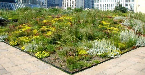 Tetti verdi: le piante più adatte ai green roof