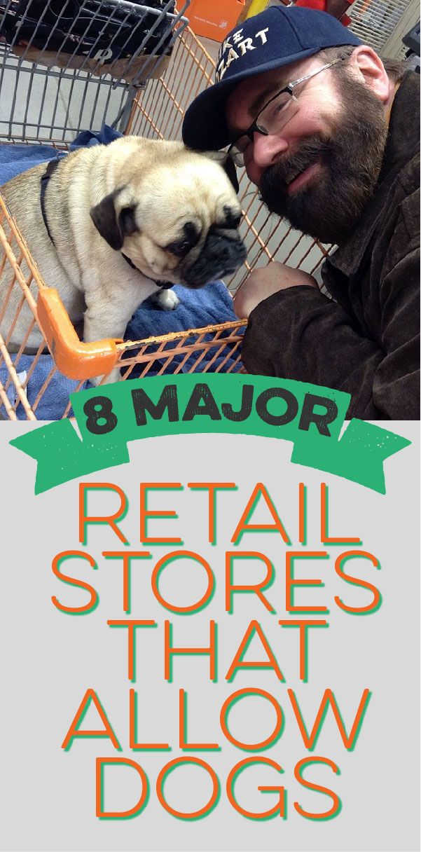 You don't have to leave your dog at home! Here are 8 major retail stores that allow dogs!