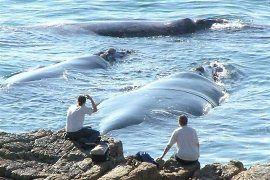 Hermanus, South Africa - best whale watching spot - second only to De Kelders, half an hour away.