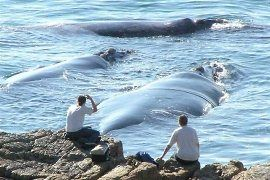 Hermanus, South Africa - best whale watching spot
