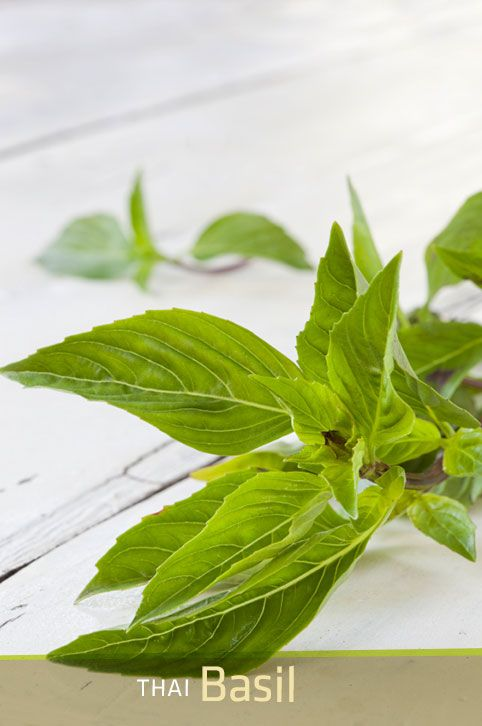 Thai Basil: One of the Fresh Summer Ingredients at P.F. Chang's #PFCSummer