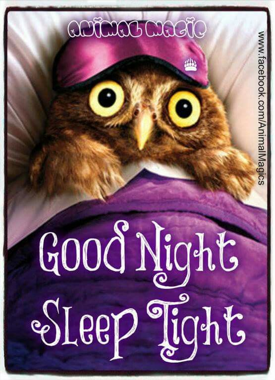 Excellent Good Night Funny Owls Owl Seriously Funny Birthday Cards Printable Opercafe Filternl
