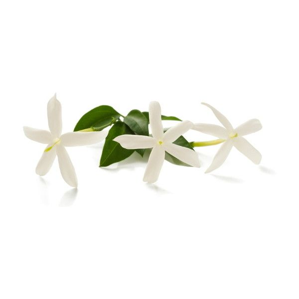 Millefiori fragrance Jasmine Ylang via Polyvore