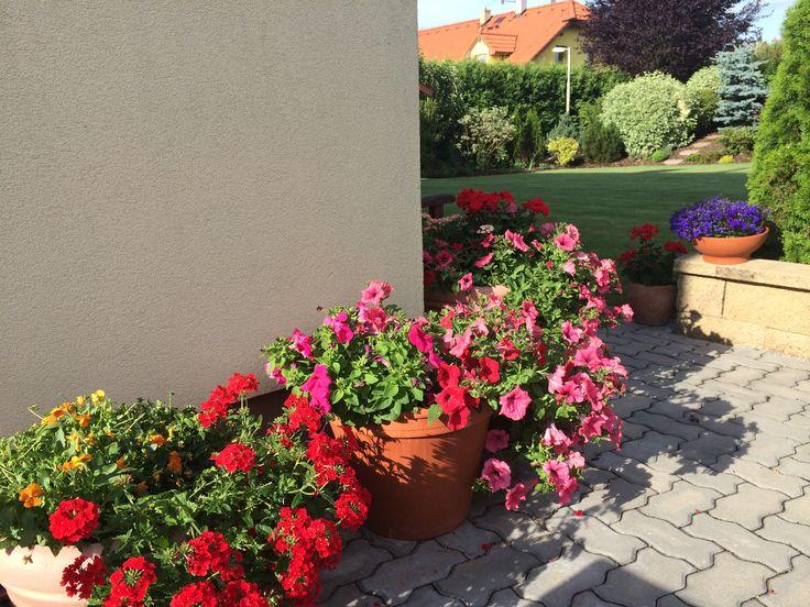 Sommer flowers in Pots