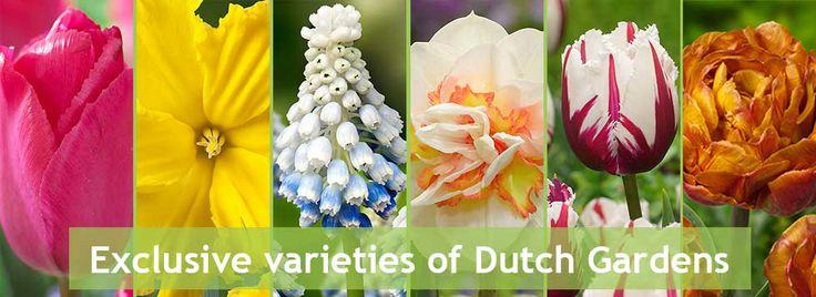 Exclusive Dutch Gardens varieties:  http://www.dutchgardens.eu/exclusive.html
