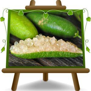 Oltre 25 fantastiche idee su piante in vaso su pinterest for Bonsai limone vendita
