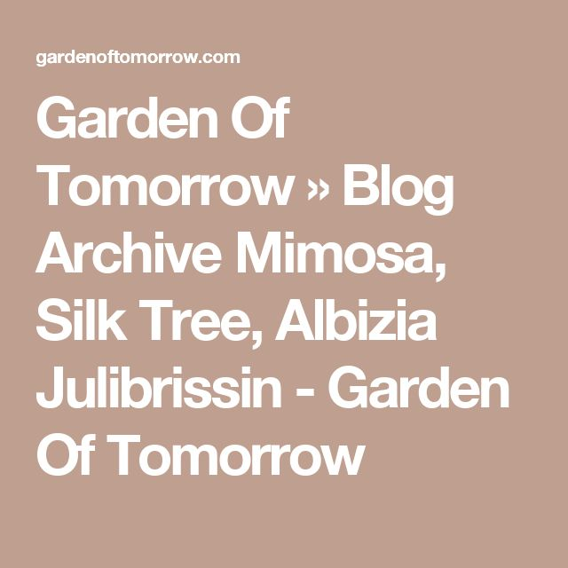 Garden Of Tomorrow  » Blog Archive  Mimosa, Silk Tree, Albizia Julibrissin - Garden Of Tomorrow