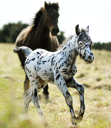http://horsesornothing.tumblr.com/post/14378525364
