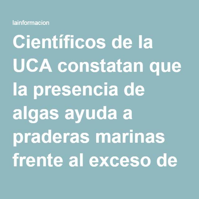 Científicos de la UCA constatan que la presencia de algas ayuda a praderas marinas frente al exceso de nutrientes Noticias, última hora, vídeos y fotos de Medio Ambiente - Contaminación Ambiental en lainformacion.com