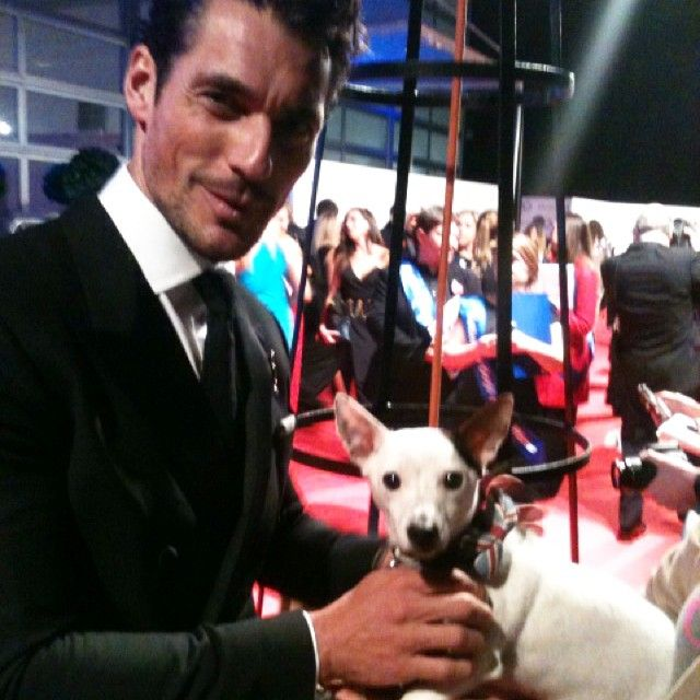 Rex on the red carpet with @davidgandy_official at the Battersea Dogs Home 'coats & collars ball' - Mr G proffering Rex a bit of greasy sausage whilst wearing a very expensive tux . Now that's a proper dog man ! go David ! @thedogjogger #rexpuppy #redcarpet #bdch #batterseadogs #coatsandcollarsball #alistdog