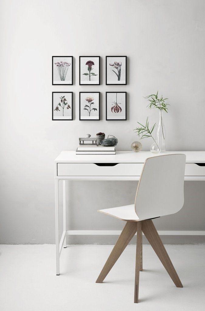ViSSEVASSE - Plakat Botanica Tulipa Gesneriana - (50x70 cm) - posters - små billeder - vægpynt - dekoration - accessories - boligindretning - inspiration - idéer.