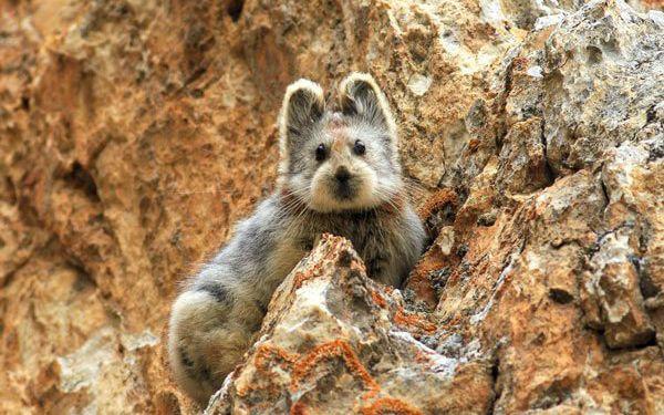 Ecco 10 fantastici animali strani e super teneri! Specie rare e particolari che incarnano perfettamente l'idea di animali pucciosi: scopritele con noi!