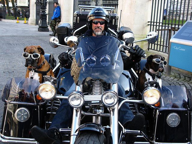 Doggles – Dogs in Sunglasses ~ The Ark In Space