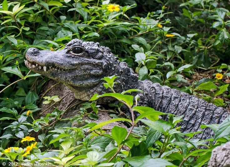 26 best Rainforest Pyramid® images on Pinterest | Galveston texas ...