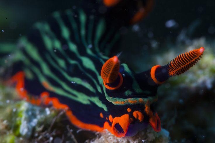 Nudibranch | Flickr - Photo Sharing!
