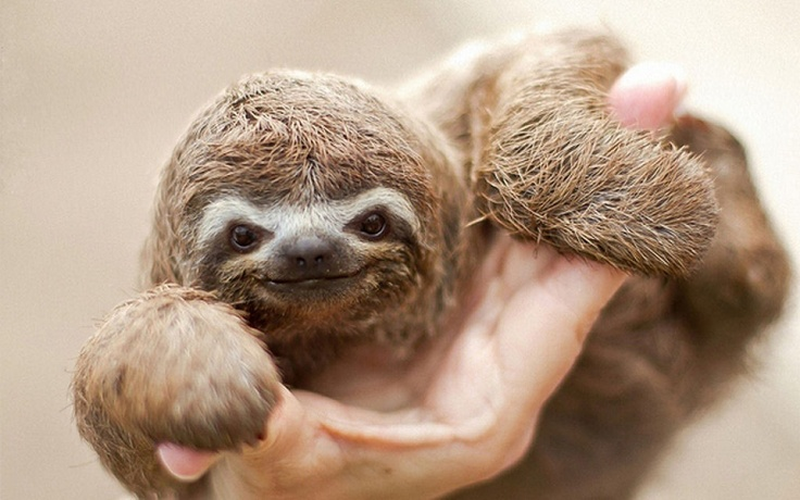 Cutest Baby, Animal Pictures, Baby Wallpapers, Baby Sloths, Baby Animal, Life Goals, Three-To Sloths, Animal Funny, Cutest Animal