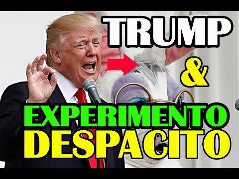 """Despacito, es un Experimento Hipnosis Colectiva """"Conejo Blanco"""" - YouTube"""