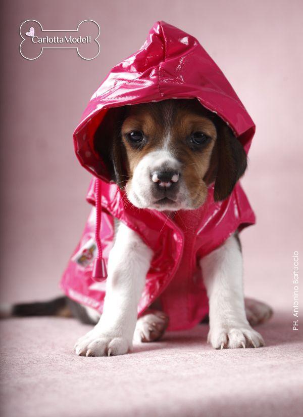 Get ready alarm weather! I found a raincoat in my closet!