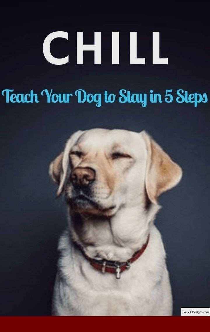 Basic Dog Obedience Training Tips Dogtrainingdog