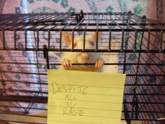 I Am Still Just A Rat In A Cage