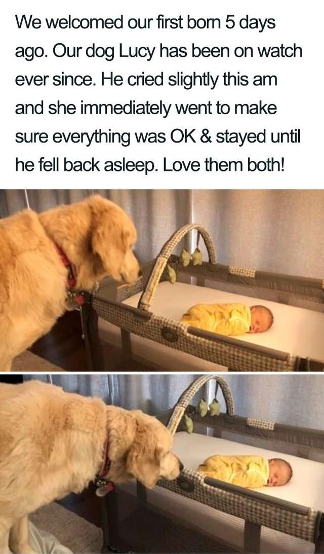 75 Wholesome Dog Posts That Will Hopefully Make Your Day (New Pics)