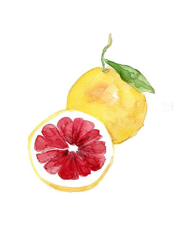 Pink grapefruit art print of original watercolor painting, citrus, Botanical Study, Kitchen art, minimalist, bright colors, home decor