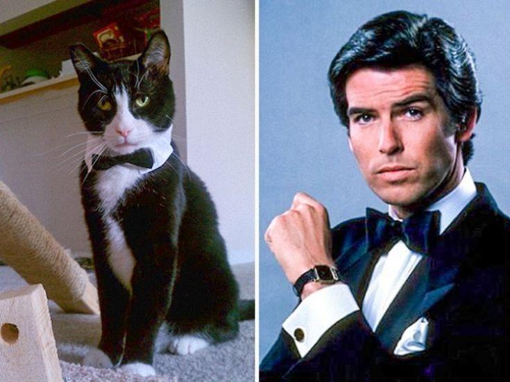 очень проста сходство кошек и животных фото цветением протяжении