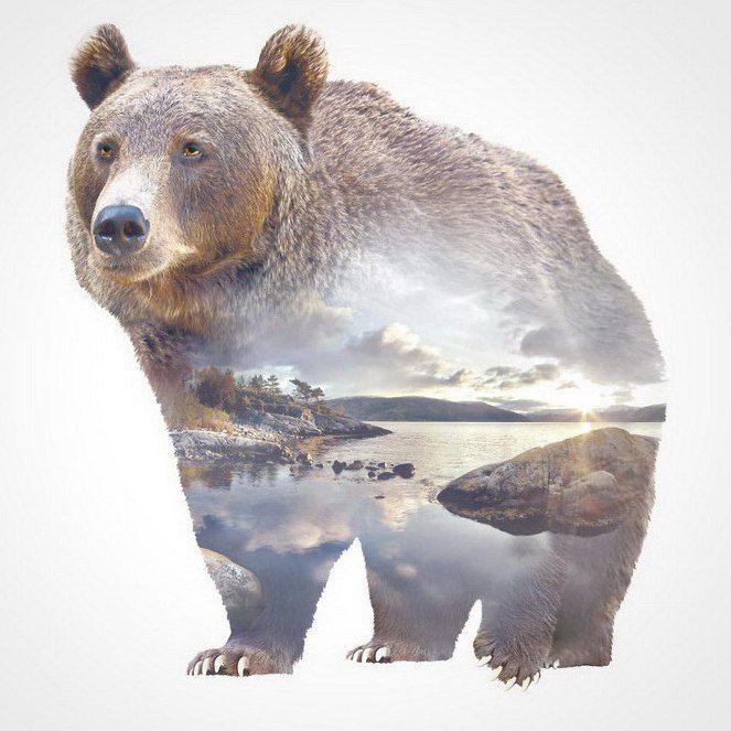 медведь стилистика картинки упаковав контейнер, без