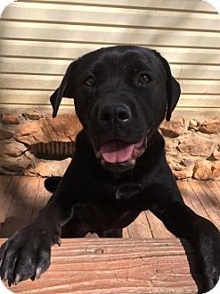 ***URGENT! - 11/10/16  BEAUTIFUL BIG BOY LONGS FOR LOVING HOME!  WALKER - a Labrador Retriever/Boxer Mix for adoption in Temple, GA who needs a loving home.