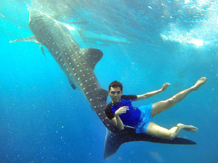 with this gentle giant #whaleshark