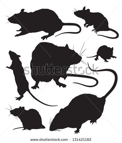 silhouettes of the rats vector