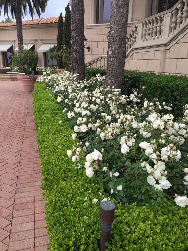 Best Cindy S Beach Front Yard Images On Pinterest Gardening