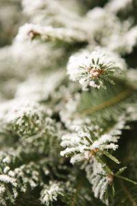 Christmas Tree Flocking Machine