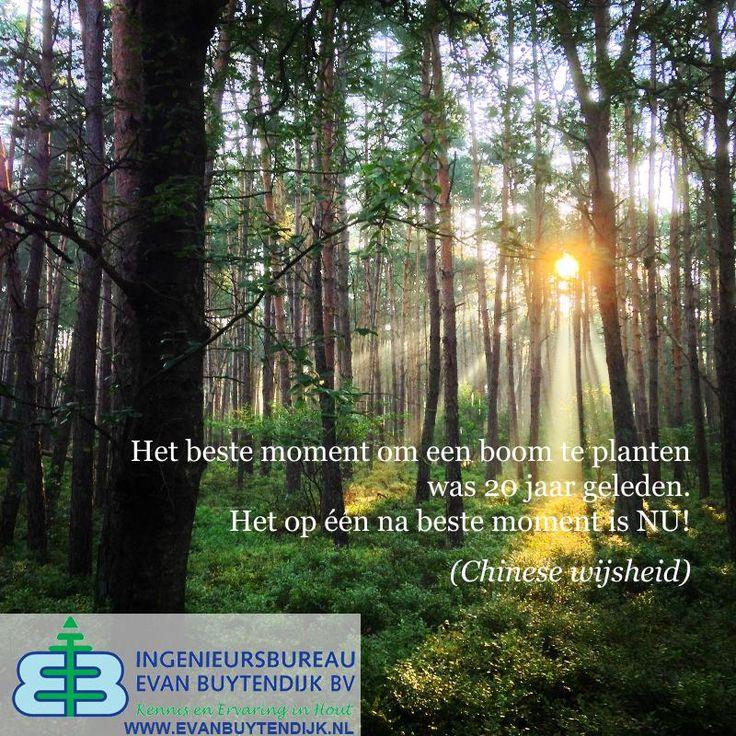 Citaten Over Bomen : Beste afbeeldingen van citaten uitspraken en aforismen