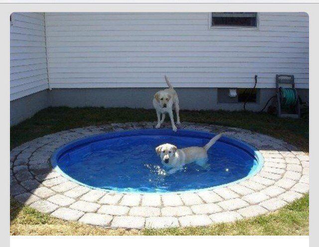 DIY Dog Pond | 25 Adorable DIY Projects You and Your Pet Will Be Fascinated About