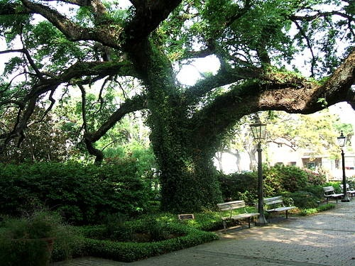 77 Best Images About Mobile Alabama Plants Trees Flowers Etc On Pinterest Gardens
