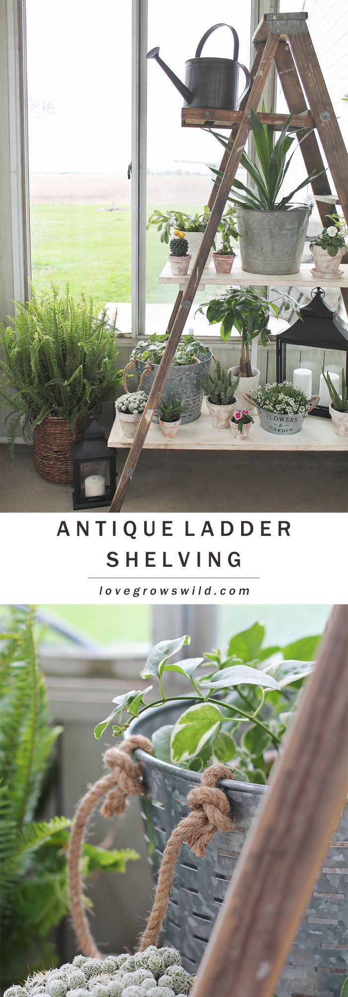 best 25 garden ladder ideas on pinterest herb planters antique ladder shelving