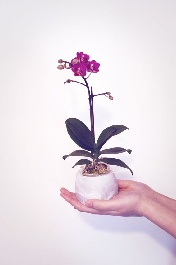 Mini orchid in resin pots by iamto'b