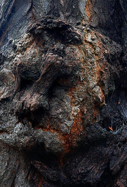 the face by Maddie Digital, via Flickr